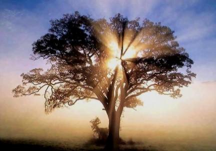 albero sogni