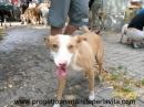 www.progettoanimalistaperlavita.com