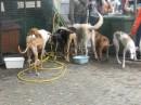 Progetto Animalista Per la vita