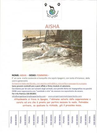 Locandine Cani da Salvare