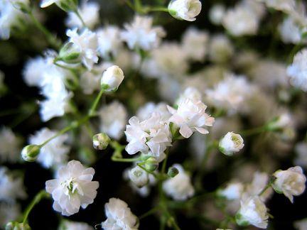 Il velo della sposa - Settembrini fiori ...