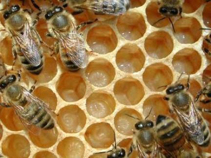 api sogni