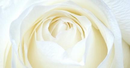 Sognare Costume Da Bagno Bianco : Il colore bianco nei sogni