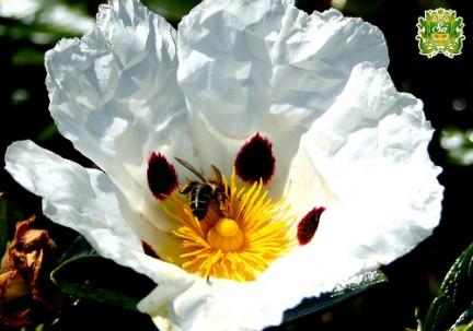 composizione del fiore