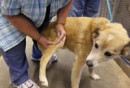 Scottie allo shelter mentre gli controllano la ferita