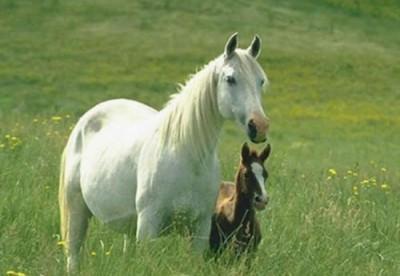 cavallo sogni
