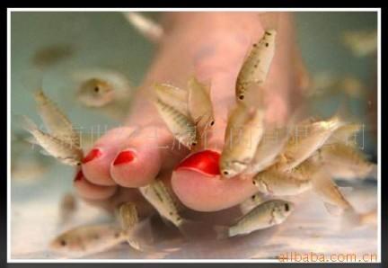 I 亲亲鱼  sono pesci che mangiano la pelle morta. Sono di moda nelle sale da bagno pubbliche cinesi