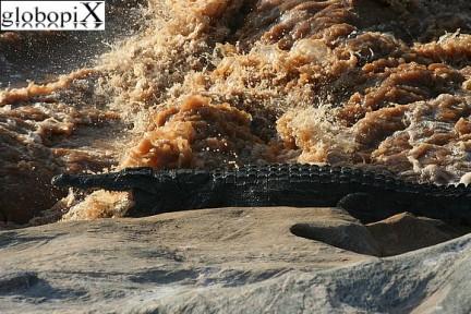 coccodrilli nel fiume Tsavo