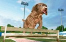 Petz Sports Dogs Playground