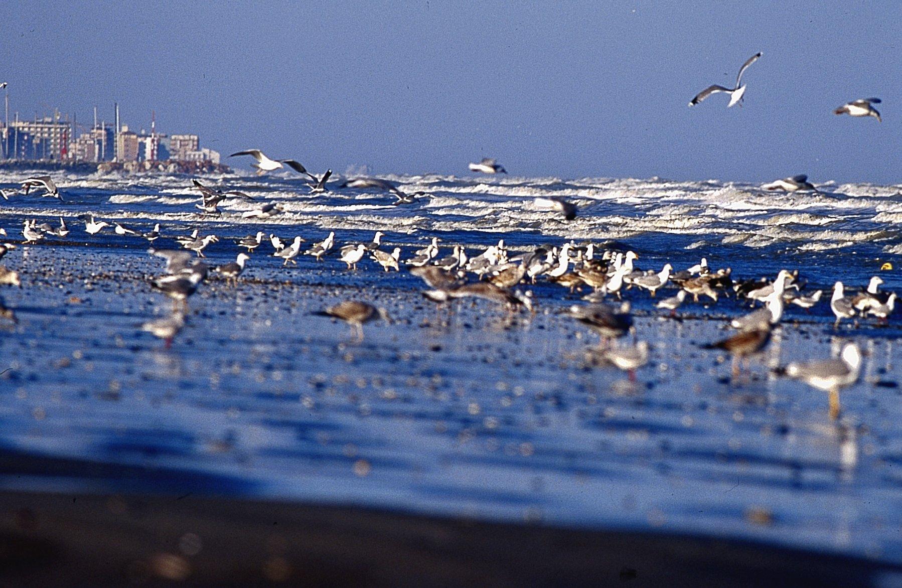 Matrimonio Spiaggia Riviera Romagnola : Cervia emozioni di luci in riva al mare d inverno