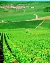 Vigneto a Reims Champagne De Vilmont