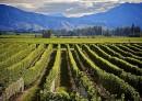 Vigneto Chardonnay