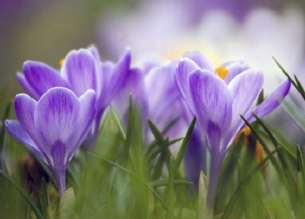 diete e primavera