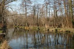 palude e bosco tipico di zona umida