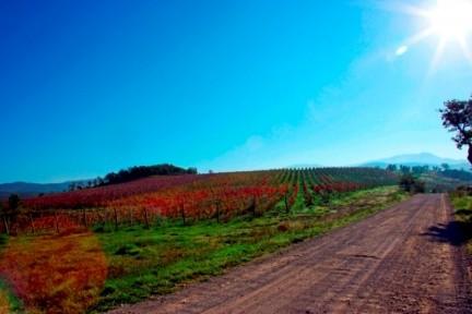 colline_Montecucco