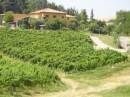 """Recentemente l'Azienda Agricola Gaggioli si è arricchita di un moderno agriturismo, il """"Borgo delle Vigne"""", seguito personalmente da Maria Letizia Gaggioli, figlia del titolare Carlo."""