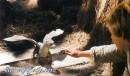 Immagine tratte direttamente dal film