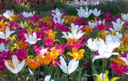 fiori sogni