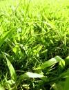 le erbe contro il gonfiore