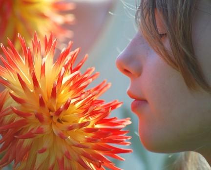 tisana per depurarsi in primavera ed eliminare le tossine