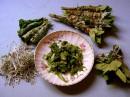 Tisane: come preparare correttamente infusi, decotti e macerati