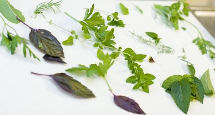 fitoterapia ed erboristeria: direttiva 2004/24/CE sui medicinali vegetali tradizionali