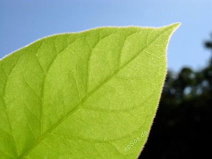 le piante utili per la salute della prostata