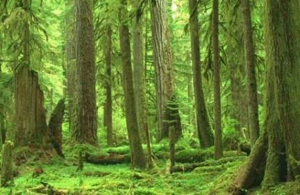 foresta sogni