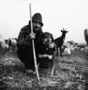 Vita nomade del pastore