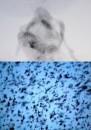 Foto-Video Installazioni di Lino Strangis