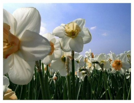 Fiore di primavera