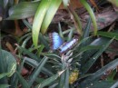 Bordano, la casa delle farfalle