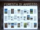 Passo Pura e la foresta di Ampezzo