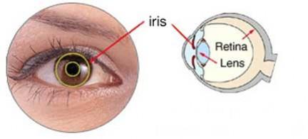 Controllo iris