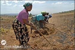 lavoratrici kikuyu nei campi