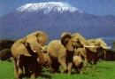 Amboseli, elefanti e Kilimanjaro: è Kenya!