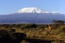 Masai Mara: twiga na Kilimanjaro