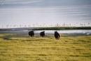 rinoceronti e fenicoteri sul lago Victoria