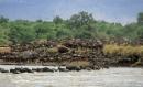 Masai Mara, life in the river