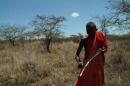 Savana e un suo abitante maasai
