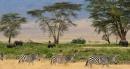 Serengeti wild life