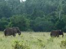 Shimba Hills: elefanti nella lussureggiante vegetazione