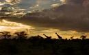 il tramonto sulla savana