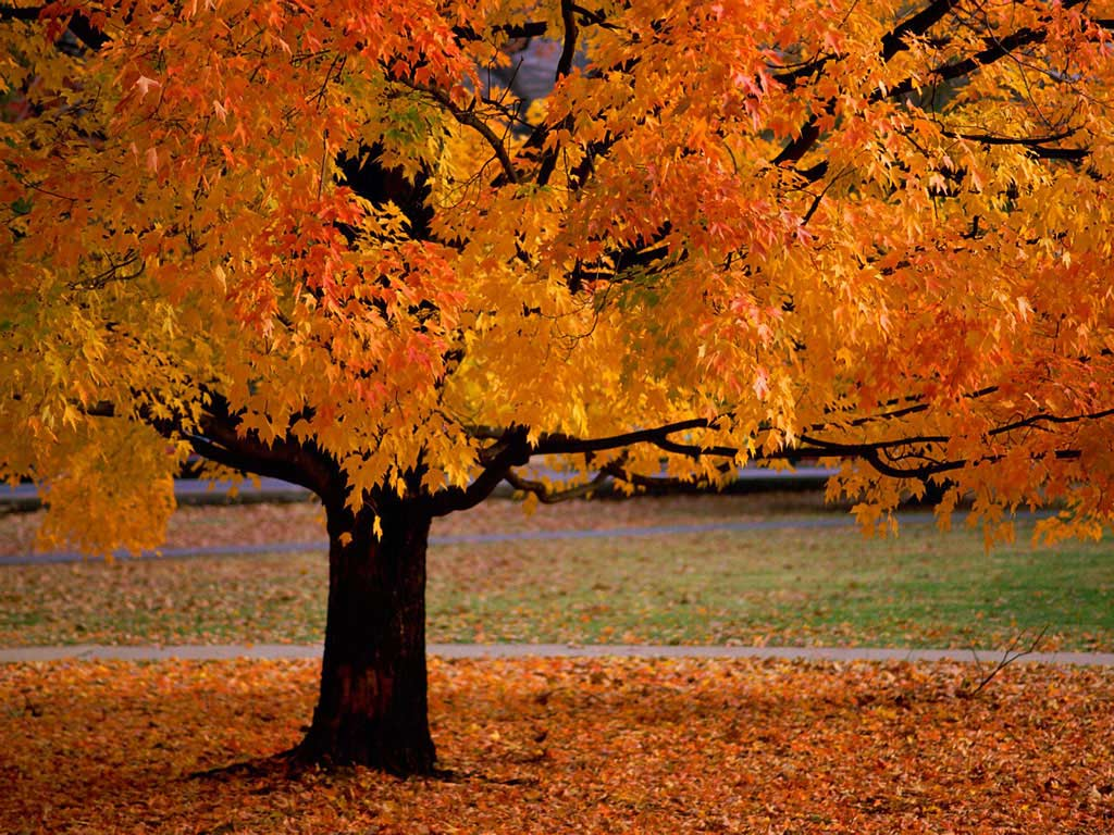 Un albero per ogni stagione