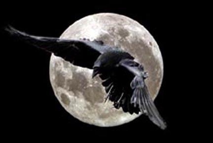 il corvo Edgar Allan Poe