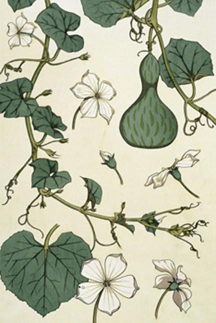 E S Grasset - La Plante et ses applications ornementales