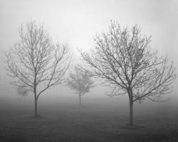 angelo della nebbia