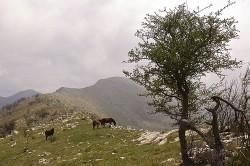 Alta Via dei Monti