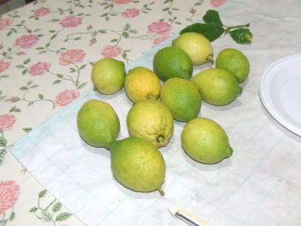 Limoni biologici del giardino di Stefania Dragonetti