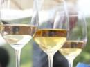 vino in degustazione 1